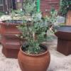 Line 2 – GRC – Orleans Planter – Rust – GPOND1 (1)
