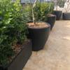 Line 5 – Stonelite – Tree Planter – Gallery – 81092 – Copy
