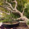 Line 5 – Stonelite – Wok Bowl – Gallery – 81099